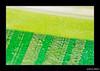 Green (G4BR13L3) Tags: green dpsgreen