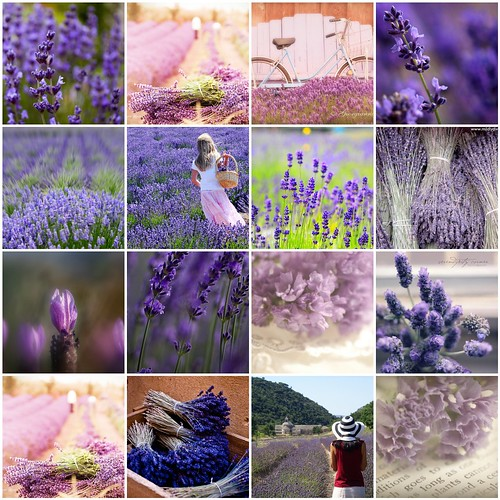 My inspiration. Lavander for Yulya Repka
