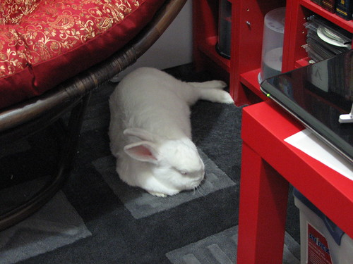 gus napping in dad's office