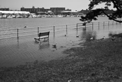 Bench in the water (Amber Wilkie | www.amberwilkie.com) Tags: bw snow water river dc washington flooding melting lunchhour dcist potomac walkingaround hainspoint we3dc