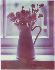 Window Flower (John Andreas Olsson) Tags: flowers blue film ikea window analog polaroid back nikon type vase 4x5 nikkor expired largeformat 59 545 toyo 45cf 15056 sockerrt