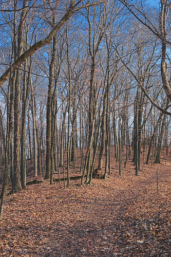 Forest, at Engelmann Woods Natural Area, in Saint Albans, Missouri, USA