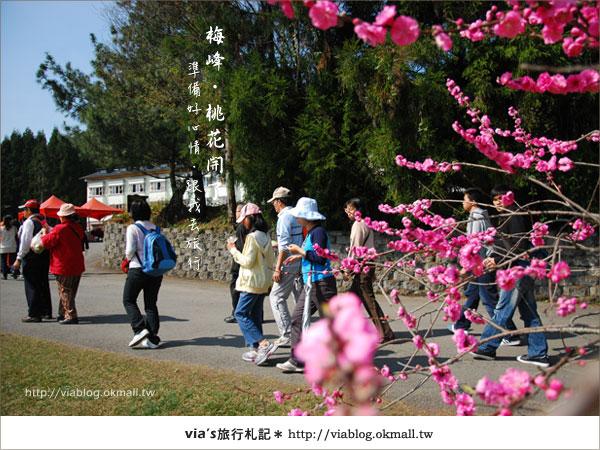 【梅峰農場桃花緣】最美的桃花隧道,就在南投梅峰這裡~(上)10