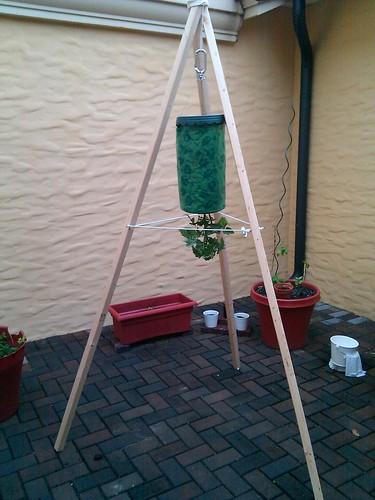 Hanging Tomato Stand