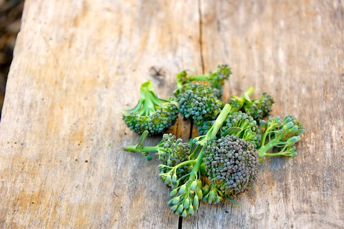 broccoli: the first harvest of 2010