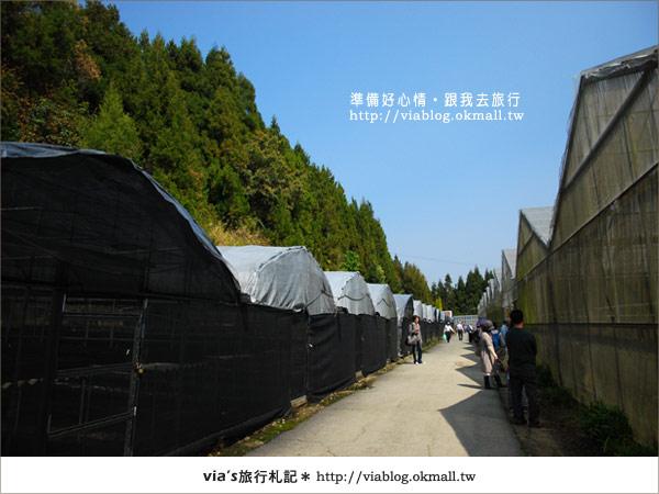 【梅峰農場】不止桃花美!梅峰農場賞花趣~(下)28