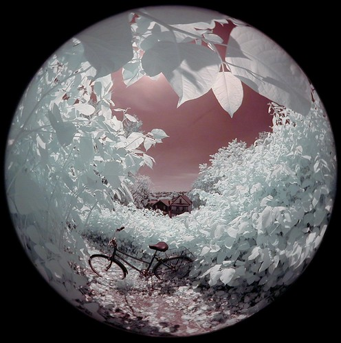 Chalfant. infrared fisheye