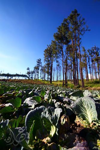 Kebun Sayur @ Cemoro Lawang, Bromo-Tengger-Semeru National Park