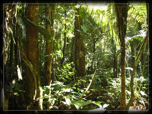foret amazonienne,yanomami,Brésil