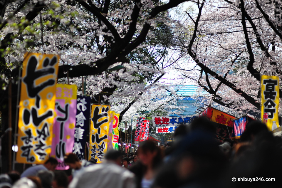 Lots of sakura, lots of color, plenty of beer and masses of people.