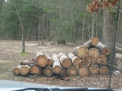 Some piled up wood. (robr3004) Tags: park state parvin
