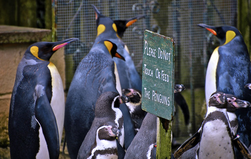 Do Not Feed The Penguins