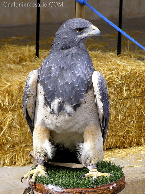 Aves extraordinarias I