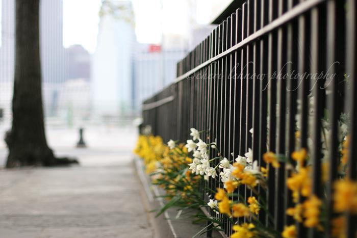 IMG_8140_flowers.jpg
