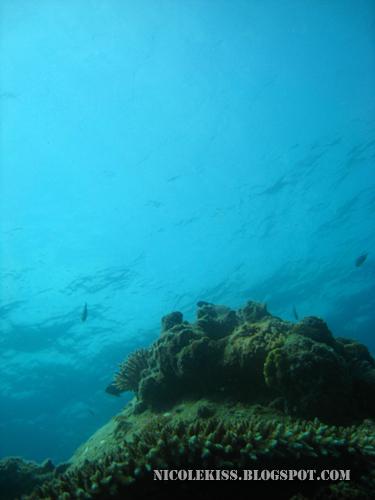 beautiful perhentian sea
