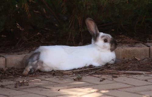 Ce n'est pas un lapin