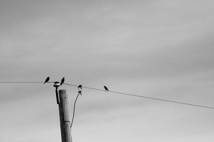 Bird commentary