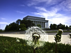 Dandelion (ehpien) Tags: usa canon washingtondc lincolnmemorial s90 img6220 day112365 22april2010