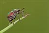 IL TAPIRO - THE TAPIR (Siprico - Silvano) Tags: canon natura macros potofgold macrofotografia greatphotographers cernuscosulnaviglio macrofografia buzznbugz siprico natureselegantshots fotografianaturalistica soloreflex pricoco silvanopricoco wwwpricocoorg httpwwwpricocoorg wwwfotografiamacrocom