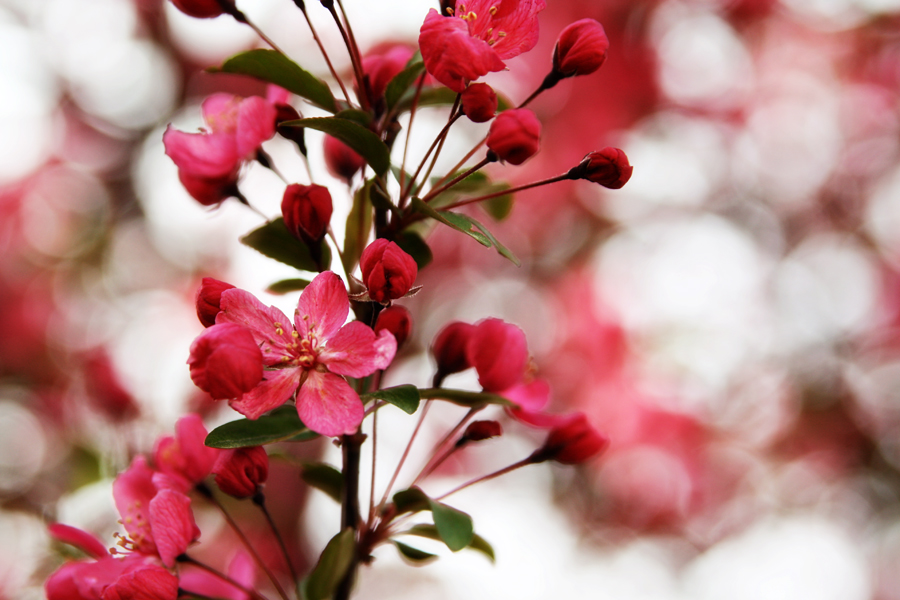 blooms and bokeh
