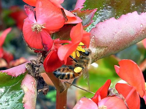 Bee 2of2