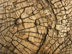 sardaigne (phildepacht) Tags: bois sardaigne détail réseau matière