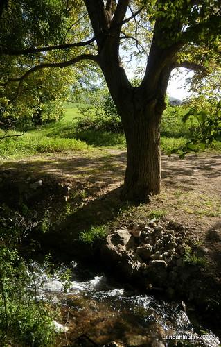 El árbol del arroyo