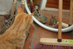 Inaccessible (Joseph SARDIN) Tags: rabbit cat chat lapin
