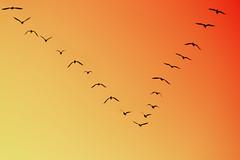 flying away..... (Lixiviant) Tags: pakistan red party orange black cute sexy bird eye nature beauty fun grey cool eyes pretty bokeh crane walk beak feather hideandseek malaysia crown demoiselle kuala process karachi sind lumpur beautifull demoisellecrane qaiser kunj 400d aplusphoto lixiviant koonj qaisermehmood peekabaoo