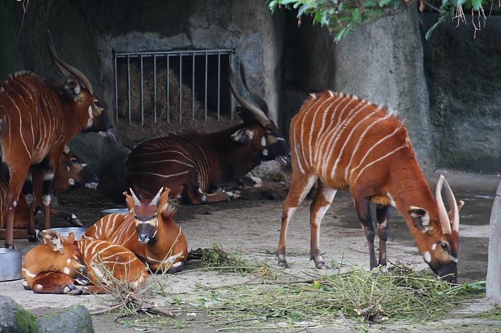 台北木柵動物園0052
