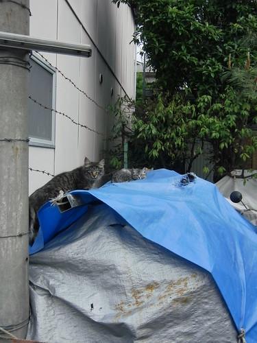 Today's Cat@2010-05-13