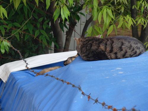 Today's Cat@2010-05-18