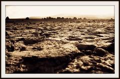 La Seca (The funambulizer) Tags: sepia atardecer golden twilight labor dry seca puesta tierras sequa crepsculo dorados