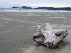 Elephant Log- Tofino Beach