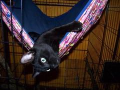 Jake likes hammocks