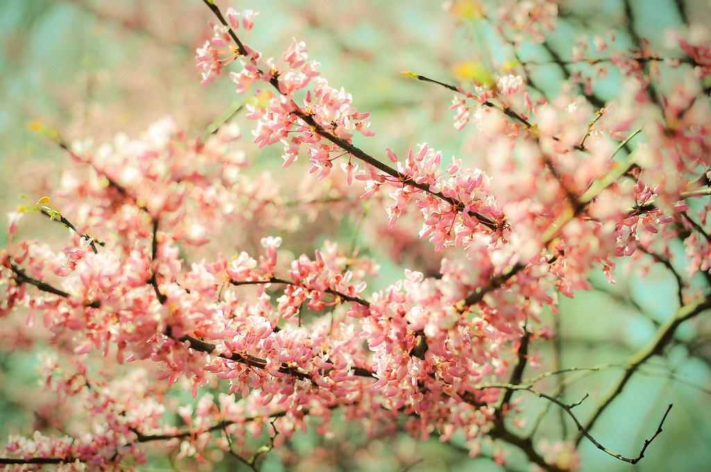 spring2010_86-51