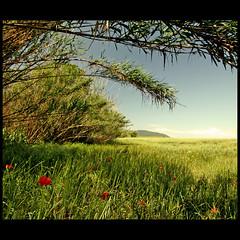 Cerca de mi casa (m@tr) Tags: espaa naturaleza canon sigma natura catalunya catalua espanya ripollet vallsoccidental canoneos400ddigital cercademicasa villaderipollet mtr sigma1020mmexdc marcovianna imagenesderipollet fotoderipollet