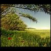 Cerca de mi casa (m@®©ãǿ►ðȅtǭǹȁðǿr◄©) Tags: españa naturaleza canon sigma natura catalunya cataluña espanya ripollet vallèsoccidental canoneos400ddigital cercademicasa villaderipollet m®©ãǿ►ðȅtǭǹȁðǿr◄© sigma10÷20mmexdc marcovianna imagenesderipollet fotoderipollet