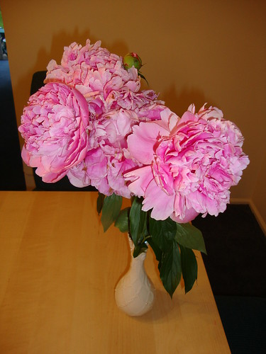 peonies--all on ONE stem!