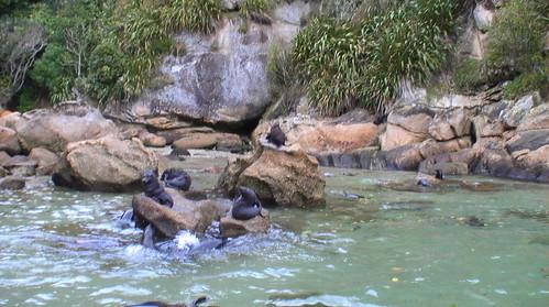 Seals @ Seal Rock