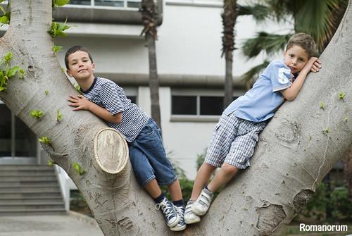 Sobre el árbol