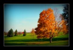 Autumn in Iowa City (USA) 2009. (Grard Farenc (slowly back) !) Tags: autumn trees usa automne unitedstates iowa arbres iowacity paysage picnik landsacpe