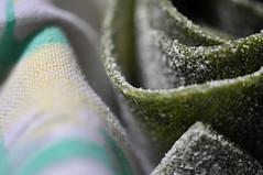 Tagliatelle verdi alle ortiche (n_s_p) Tags: verde mani pasta acqua regalo tagliatelle fresca visite domenica ricetta magia silenzio sugo farina passeggiata uova odore preparazione rag ortche