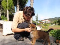 Nico et le puppy