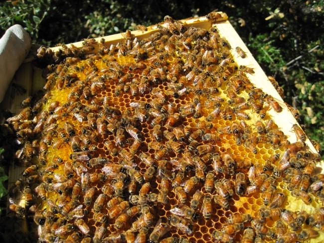 beekeeping 256 (650 x 488)