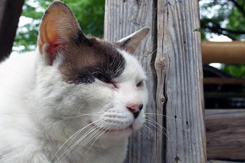 Today's Cat@2010-06-16