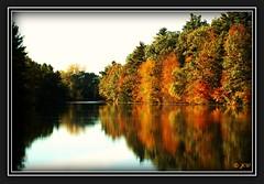 Autumn Solitude (Jenn's View) Tags: autumn trees reflection nature landscape pond nikon d70s canadian norfolkcounty cans2s portryerse hayconservationpark