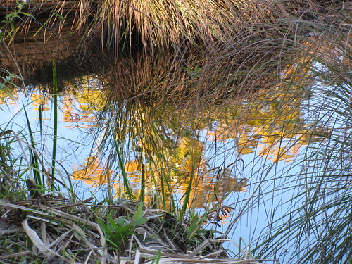 Pound Ridge Reflections 1