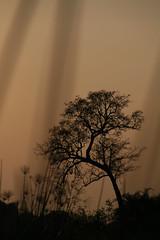Tree (sparkeypants) Tags: africa travel tree water canon geotagged evening quiet dusk delta calm botswana okavango okavangodelta