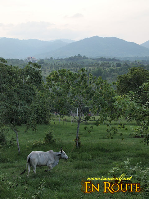 Mitra's Ranch View